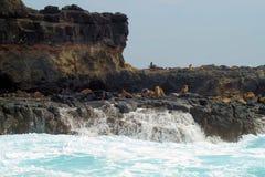 Rocas en Victoria, Australia del sello foto de archivo
