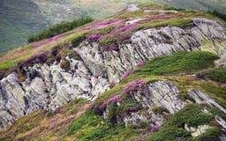 Rocas florecientes Fotos de archivo libres de regalías
