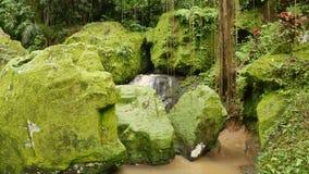 Rocas grandes cubiertas en musgo verde claro y corriente metrajes