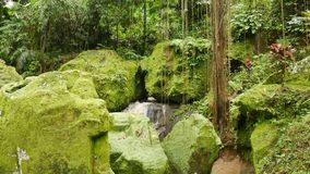 Rocas grandes cubiertas en musgo y lianas verdes claros almacen de metraje de vídeo