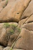Rocas medias de la planta Fotografía de archivo