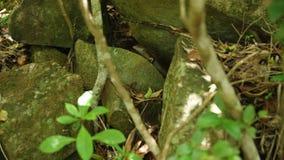 Rocas medias de un lagarto almacen de metraje de vídeo