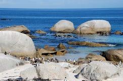 Rocas, océano y pingüinos Foto de archivo