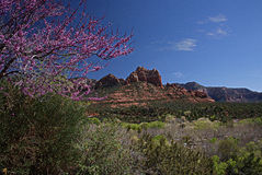 Rocas rojas de Sedona 2 Imagen de archivo