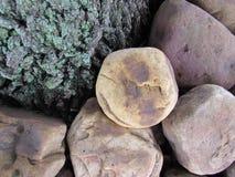 Rocas y árbol Foto de archivo libre de regalías