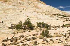 Rocas y árboles 1 Imagen de archivo libre de regalías