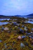 Rocas y algas fotografía de archivo