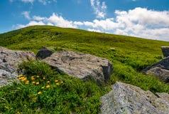 Rocas y dientes de león en la ladera herbosa Fotografía de archivo