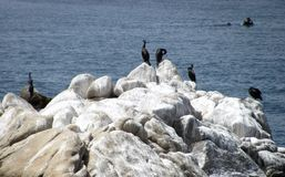 Rocas y fauna que se asolean en el área de la bahía de Monterrey imagenes de archivo