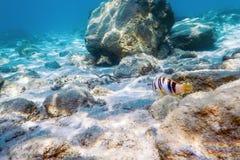 Rocas y guijarros subacuáticos de los rayos de sol en los pescados de la natación del fondo del mar imagenes de archivo