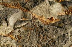 Rocas y hojas secadas Foto de archivo libre de regalías