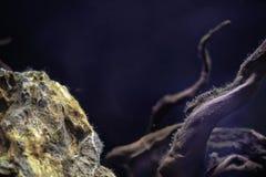 Rocas y madera en acuario Equipo del acuario Vida marina Copie el espacio Subacuático imagen de archivo libre de regalías