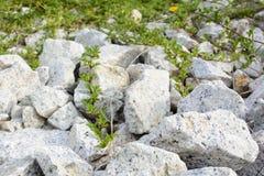 Rocas y naturaleza y modelo de la hierba Foto de archivo libre de regalías
