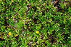 Rocas y naturaleza y modelo de la hierba Imagen de archivo libre de regalías