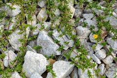 Rocas y naturaleza y modelo de la hierba Fotos de archivo libres de regalías