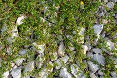 Rocas y naturaleza y modelo de la hierba Fotografía de archivo