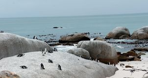 Rocas y pingüinos Imágenes de archivo libres de regalías
