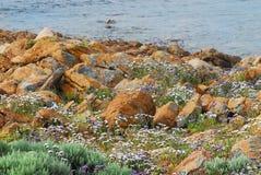 Rocas y Wildflowers de Australia a lo largo de la costa oeste fotografía de archivo