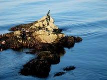 Rocce alla spiaggia dell'oceano Immagine Stock