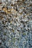 Rocce basaltiche in Asbyrgi, Jokulsargljufur, Islanda Fotografie Stock