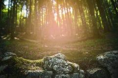 Rocce con muschio in una foresta ed il fondo di tramonto in Germania immagine stock libera da diritti
