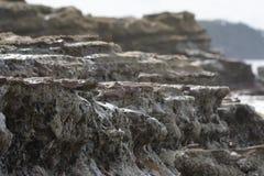 Rocce corrose dal mare Immagine Stock Libera da Diritti