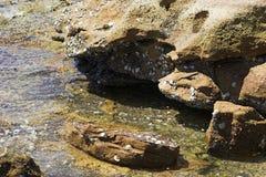 Rocce del mare Fotografie Stock