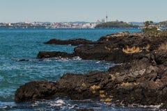 Rocce della lava all'isola di Rangitoto Fotografie Stock Libere da Diritti