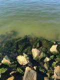 Rocce delle alghe Fotografie Stock Libere da Diritti