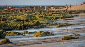 Rocce di bassa marea Fotografie Stock