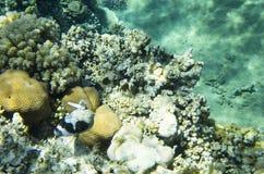 Rocce di corallo sul fondo Fotografie Stock