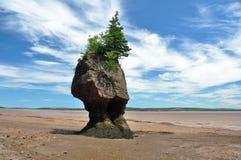 Rocce di Hopewell alla marea bassa Fotografia Stock Libera da Diritti