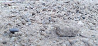 Rocce e bastoni e una formica e una certa sabbia immagini stock libere da diritti