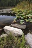 Rocce e piante dalla riva Fotografia Stock