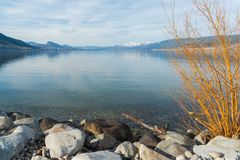 Rocce e rami gialli dell'arbusto con il lago calmo e delle montagne innevate nella distanza in molla in anticipo Fotografie Stock Libere da Diritti