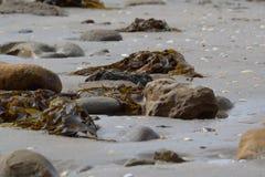 Rocce e seagrass sulla spiaggia Fotografia Stock Libera da Diritti