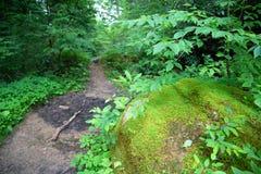 Rocce e traccia muscose della foresta immagine stock libera da diritti