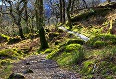 Rocce ed alberi coperti in muschio sparso lungo il percorso Snondon di Watkins Fotografia Stock Libera da Diritti