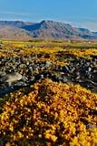 Rocce ed autunno in Islanda Immagini Stock Libere da Diritti