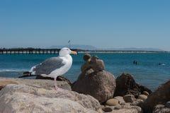 Rocce ed uccello equilibrati sulla riva della spiaggia Immagine Stock