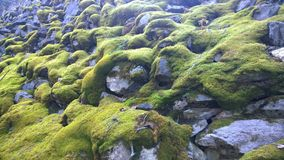 Rocce muscose nel parco nazionale di Banff, Canada Immagine Stock