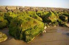 Rocce muscose verdi sulla spiaggia Fotografie Stock