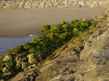 Rocce muscose verdi sulla spiaggia durante l'uscita Immagine Stock Libera da Diritti