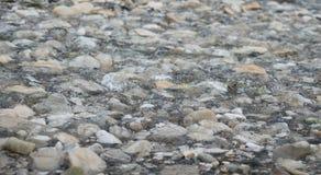 Rocce nel fiume Fotografia Stock Libera da Diritti