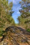 Rocce nella foresta di estate Immagine Stock