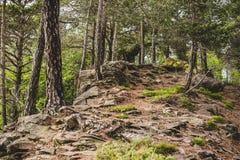 Rocce nella foresta nelle alpi Italia di un giorno piovoso Fotografia Stock