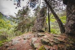 Rocce nella foresta nelle alpi Italia di un giorno piovoso Fotografie Stock