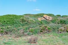 Rocce nella vegetazione Fotografia Stock
