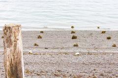 Rocce per gli indicatori di alta marea Fotografia Stock Libera da Diritti