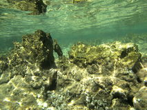 Rocce subacquee Fotografie Stock Libere da Diritti